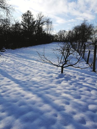 garden in winter, recovery for apple trees Winter Snow Cold Temperature Nature Tranquility Day Tree Landscape Beauty In Nature No People Scenics Outdoors