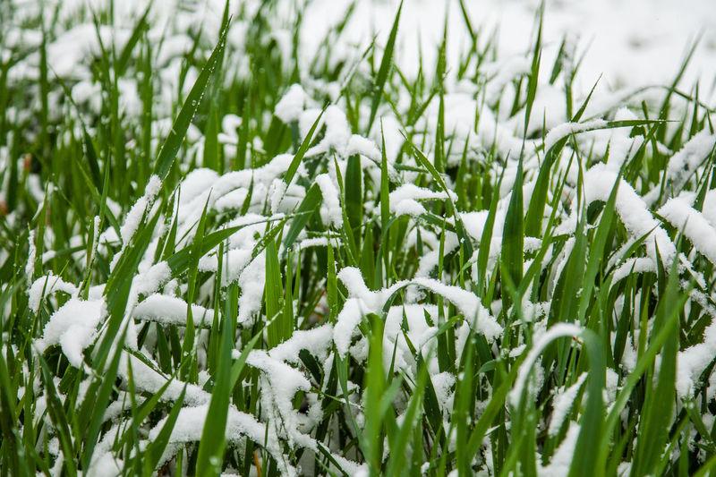Green grass in