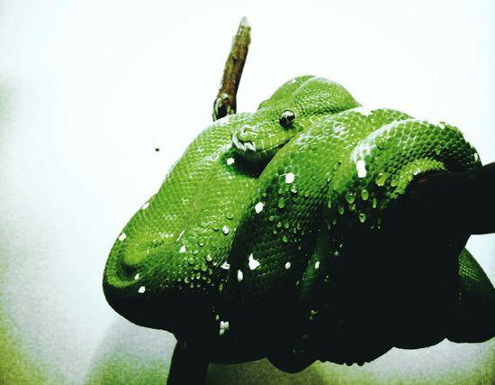 Photography Snake ♥