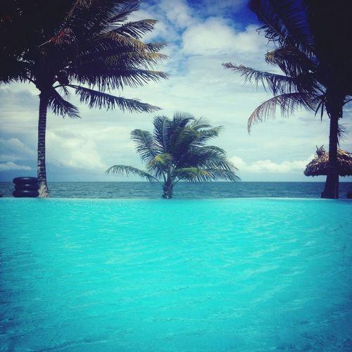 Holiday Travel Beach Poolside Pool Palm Trees Ocean