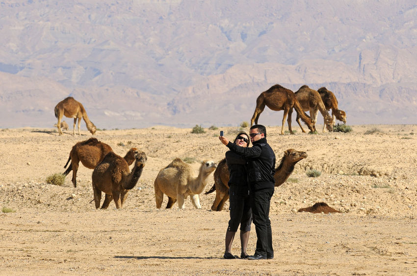 Animal Themes Animal Wildlife Animals In The Wild Camels Friendship Outdoors People Photographing Selfies!