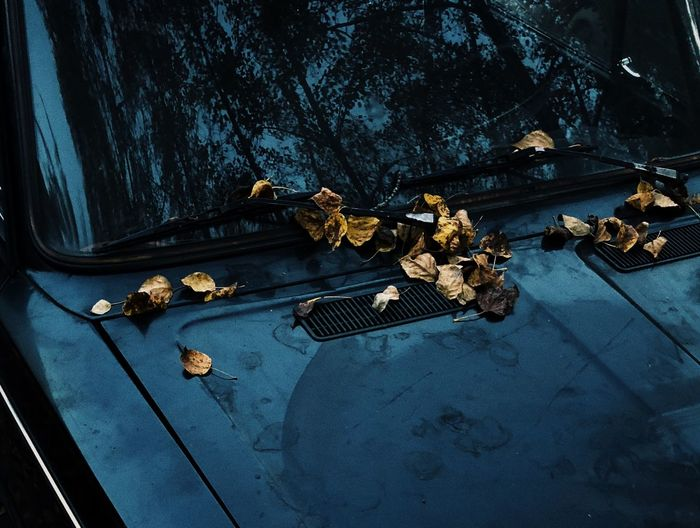 High angle view of dried leaves on vehicle bonnet