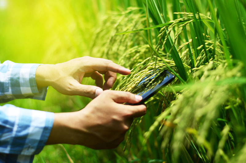 Cropped Hands Of Man Using Digital Tablet By Crops At Farm