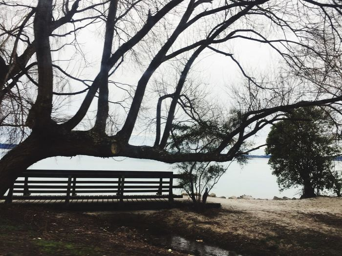 miday walk Fresh And Clean Lake Front Tree Plant Sky Nature Bench Water Seat Beauty In Nature Lake Tranquility Day No People Outdoors