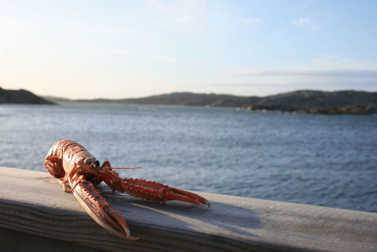 Close-up of lobster by sea against sky