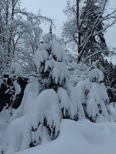 Zhavoronki, Russia, Freezing Freezing Cold Russia Tree TreePorn Trees Winter Winterscapes Zhavoronki Beauty In Nature Cold Temperature Day Freeze Nature No People Sky Snow Tranquility Tree Tree_collection  Trees And Nature Trees And Sky Winter Winter Trees Winter_collection