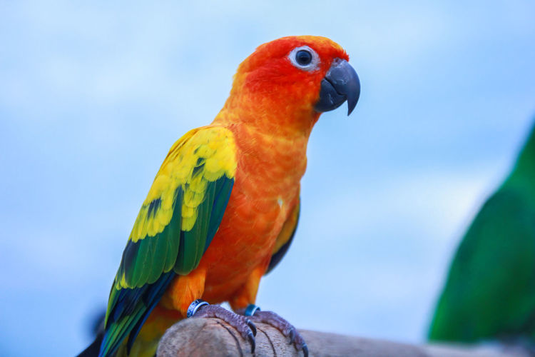 Animal Themes Bird Parrot Vertebrate Animal Animal Wildlife One Animal Animals In The Wild Perching Close-up No People Focus On Foreground Nature Day Multi Colored Orange Color Outdoors Feather  Blue Branch Rainbow Lorikeet