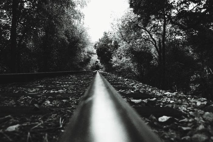 EyeEm Selects Railroad Track Transportation Rail Transportation The Way Forward Diminishing Perspective No People Straight Railroad Day Railway Track Railroad Tie Public Transportation Nature Growth Outdoors