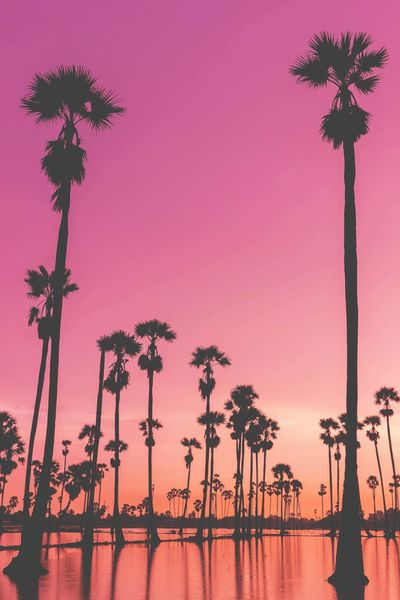 pastel colours EyeEm Selects EyeEmNewHere EyeEm Best Shots EyeEm Gallery Pastel Sugar Palm Tree