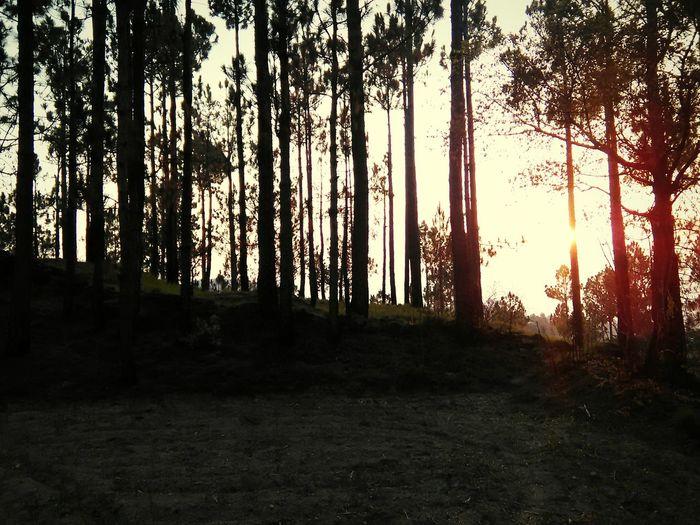 An Evening Smoky Shadows Pines Last Light Of Day Grey Capture Tomorrow