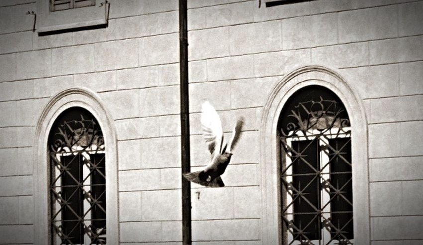 City Bird Blackandwhite