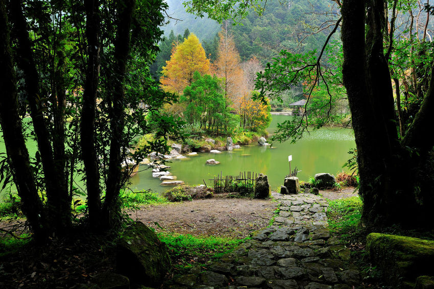 Autumn season, colorful lake view. Autumn Animal Themes Autumn Beauty In Nature Branch Compared Day Fall Forest Grass Growth Lake Landscape Leaf Nature No People Outdoors Peaceful Quiet Forest Scenics Tranquil Scene Tranquility Tree Tree Trunk Water