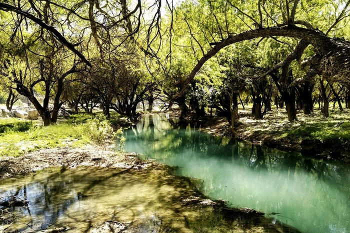 Water Tranquil Scene Tree Beauty In Nature Outdoors Taking Photos Mobile Photography Mexico Bustamante, Nl, México. Great Outdoors Outdoor Old Phone Photo Landscape Landscapes Personal Perspective Vibrant Color Live For The Story