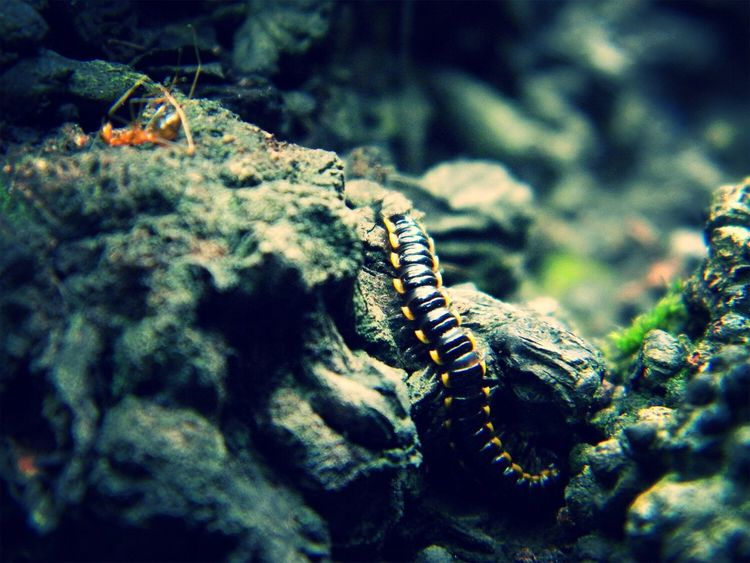 Camera: Nikon L100 Philippines Nature Insect Photography