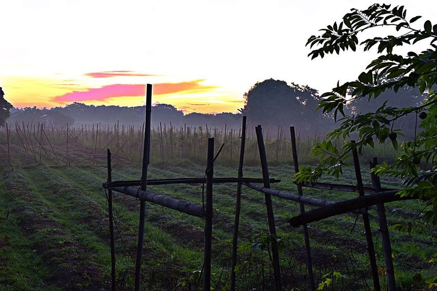 at our backyard Barrier Beauty In Nature Boundary Environment Fence Field Grass Growth Land Landscape Nature No People Non-urban Scene Outdoors Plant Scenics - Nature Sky Sun Sunset Tranquil Scene Tranquility Tree Wooden Post