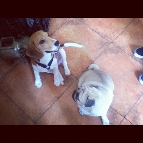 Buster and Bella :) ?