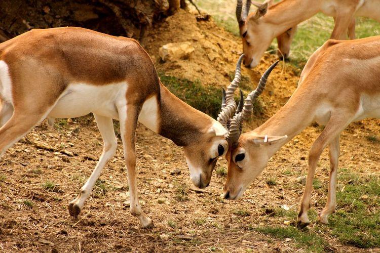 Canon Canonphotography Zoo De Beauval Qui Est Le Plus Fort? Animal Photography Nature Bagarre De Bois Love Photo