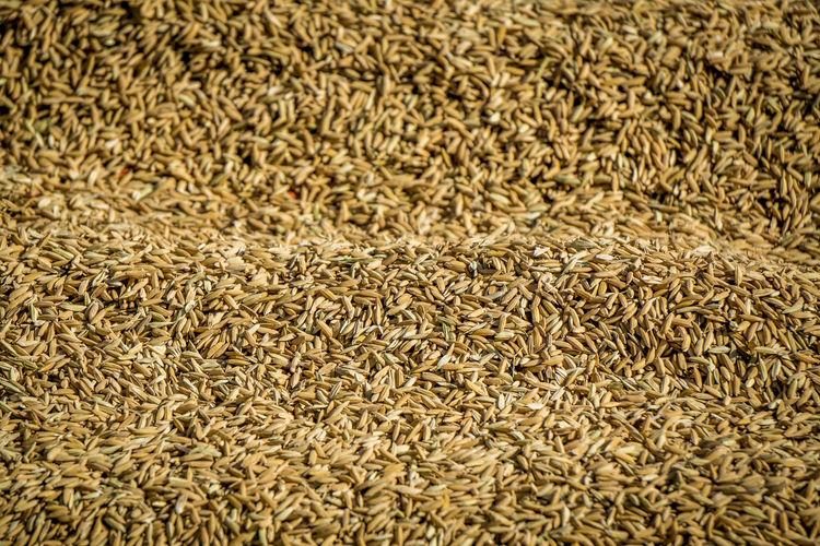 Rice Abundance