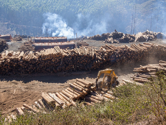 Forestry industry and stack of logs in swaziland