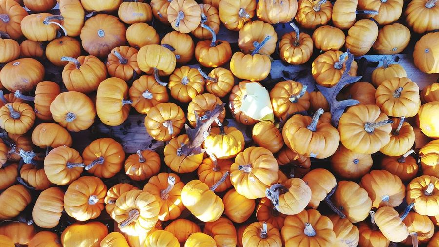 Large Group Of Objects Pumpkin Patch Pumpkins Pumpkinpatch Directly Above Orange Color Fall_collection Fall Colors Fall Collection Autumn Autumn Collection Halloween_Collection Halloween EyeEm Halloween Pumpkins Halloween