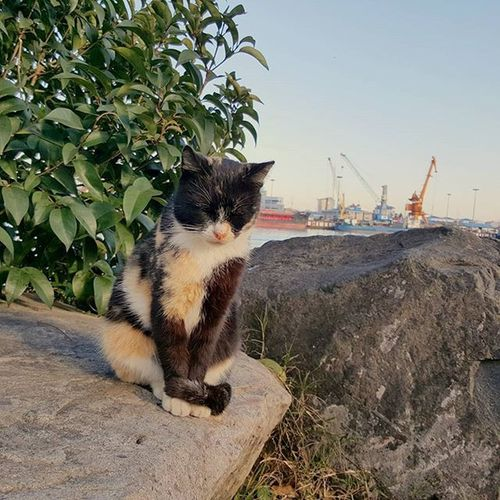 Sleepy cat 😆 Cat Animal Tree Stone Anzali