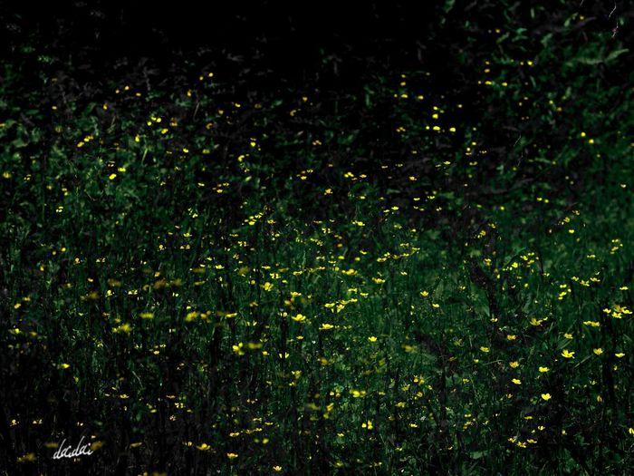 E-PL3 花 Flower Outdoors The Great Outdoors - 2017 EyeEm Awards 光 Lightroom Edit 蛍じゃないよ