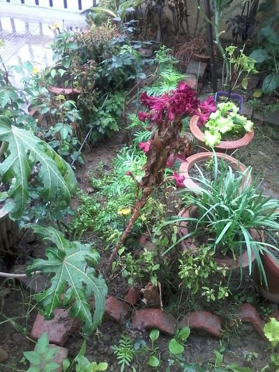 How's The Weather Today? Colorful greenery after showers of rain Colorful Greenery After Rains Colorful Natural Photo Nature Colorful Greenery Plant's After Rains Greenery