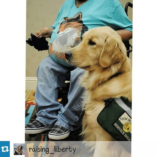 """Repost from @raising_liberty with @repostapp I've heard many times (including today), """"I wish I had an excuse to bring my dog everywhere"""" or """"I wish my dog could come with me all the time"""". While those statements sound innocent let's take a second to think about what a service dog represents. A service dog is a dog specially trained to assist someone with a disability. Did you get that? A DISability. By making that statement you are implying that you'd like to have a disability, a condition, disease, or chronic affliction that severely limits you EVERY. SINGLE. DAY. In essence you want to be forced to rely upon another being (human or canine) to accomplish every day tasks. It suddenly doesn't sound so fun does it? Service dogs are incredible, adorable, and intelligent but most if not all disabled individuals would give up the service dog in order to live a """"normal"""" life. So next time you think, """"Gee I sure wish I could bring my dog everywhere...you're so lucky!"""" think to yourself 'do I want the disability that comes along with it'? Servicedog Servicedogintraining Workingdog disability assistancedog newhorizonsservicedogs disabilityawareness"""