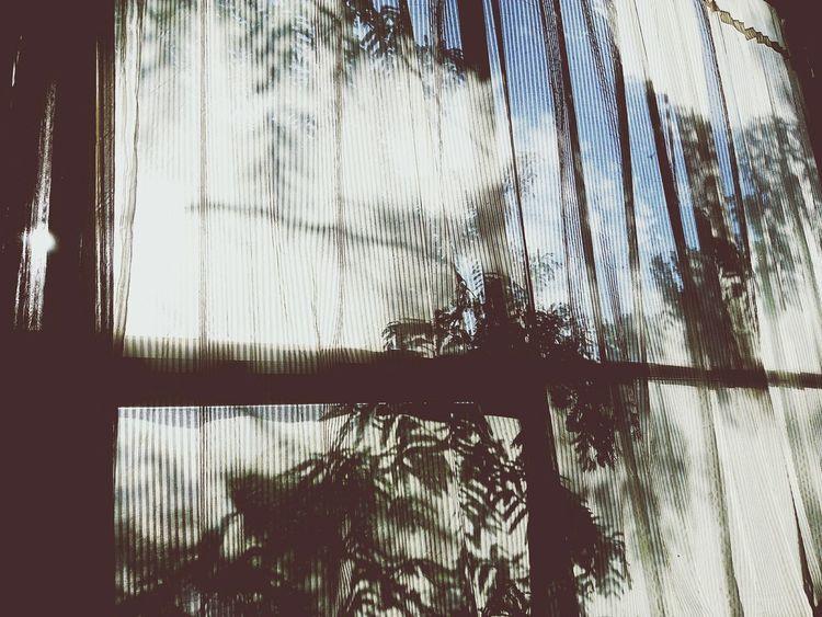 Window No People