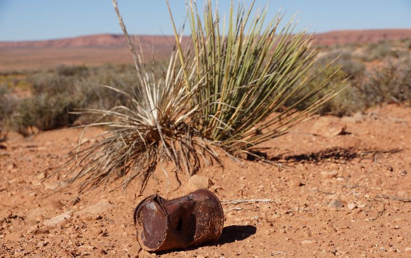 Low angle view of rusty can against plant