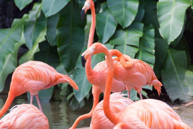 Close-up of flamingos in water