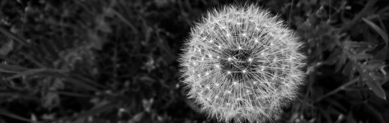 Nature Dandelion Plant Flower Close-up Outdoors No People Fragility Flower Head Black&white Black And White Photography Dandelion Macro Dandelion Seed Head Dandelion Close-up Dandelion Seed Night Freshness Illuminated Beauty In Nature Break The Mold