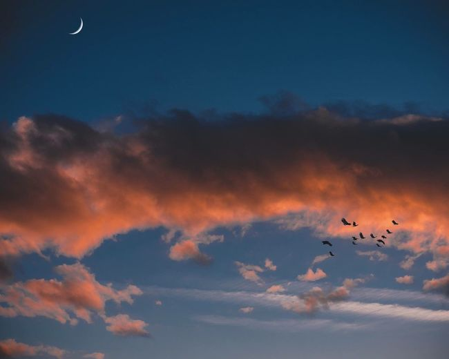 Flying Bird Sky Animals In The Wild Cloud - Sky Flock Of Birds Beauty In Nature Mid-air Sunset Scenics Moon No People Yorkshire Dramatic Sky Atmospheric Mood Hull City Of Culture 2017 Hull