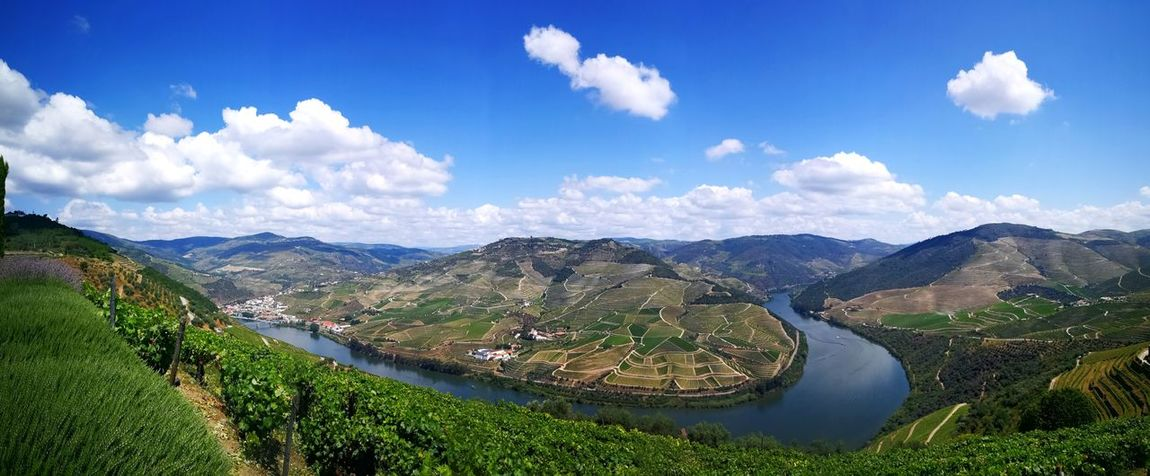 Port tasting in Douro Douro  Portugal Wine Winefields Panorama Nature Nature Photography Nature_collection Water Tea Crop Cloud - Sky Mountain Range