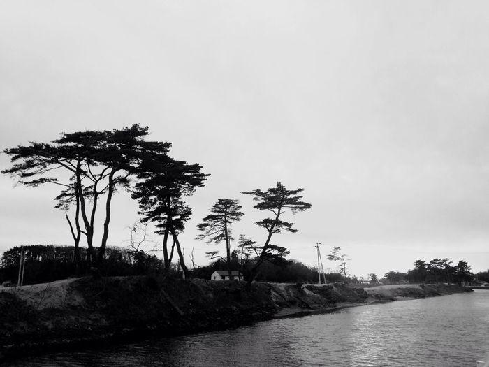 TreePorn Monochrome Blackandwhite Streetphotography