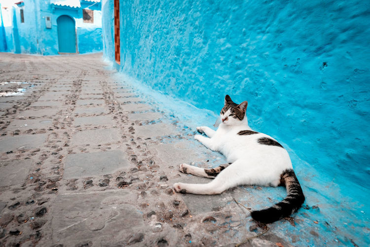 View of a cat lying on land