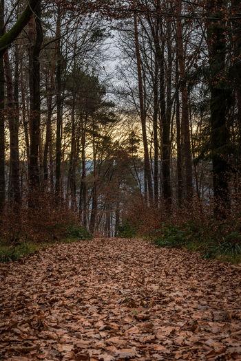 Autumn Mossy Tree Fall Fallen Leaves Forest Landscape Leaves Moss Treesdallas