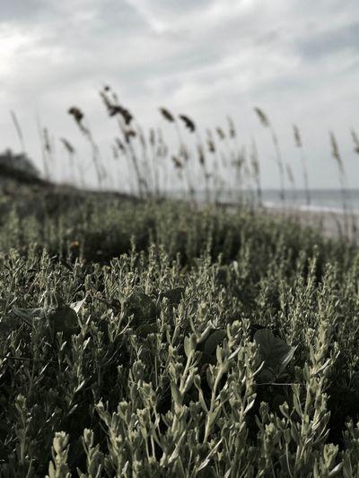 EyeEmNewHere Landscape Beach Ocean Nature