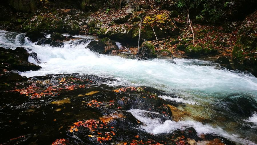 Water No People Nature Outdoors Beauty In Nature Day Motion Forest Nature Autumn Power Of Nature Beauty In Nature