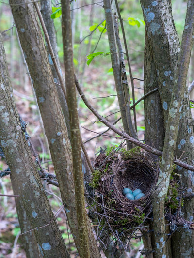 Plant Tree Trunk Tree Trunk Focus On Foreground Nature Day Growth No People Close-up Land Outdoors Forest Branch Tranquility Wood - Material Textured  Beauty In Nature High Angle View Selective Focus Birdsnest Nest Nesting Place Nest Egg Egg Springtime Wildlife New Start