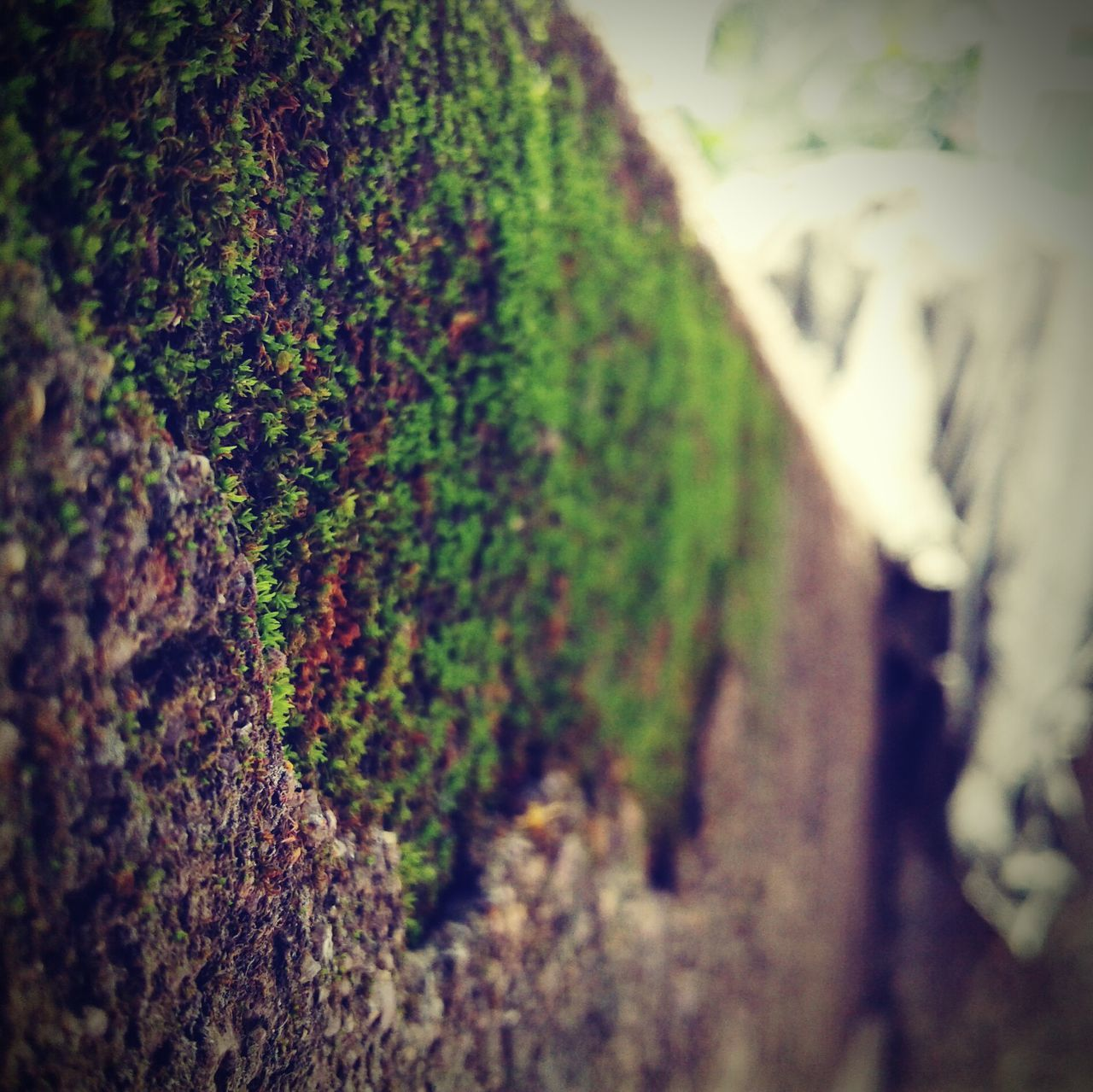 selective focus, nature, no people, day, close-up, plant, outdoors, growth, tree, beauty in nature, freshness