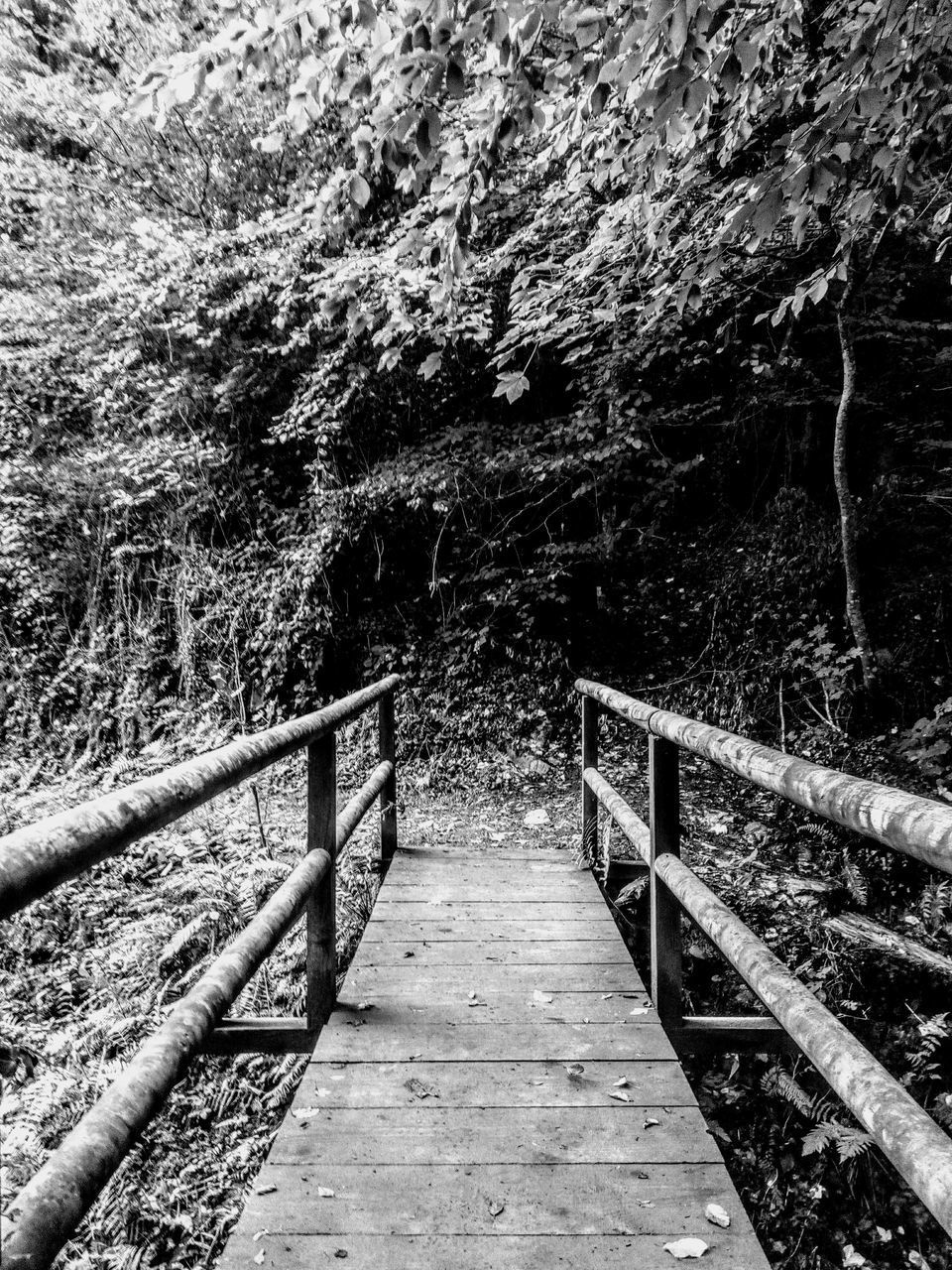 the way forward, tree, direction, railing, plant, bridge, land, forest, connection, wood - material, footbridge, nature, day, built structure, architecture, no people, tranquility, bridge - man made structure, footpath, outdoors, diminishing perspective, wood, long