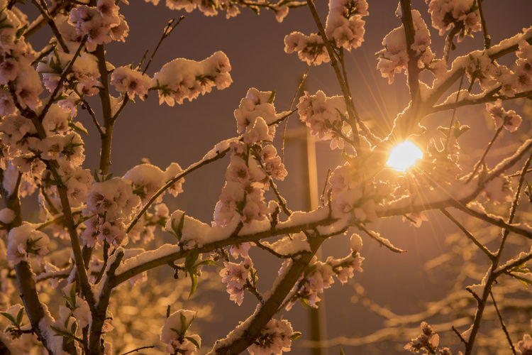 清明的雪 Beauty In Nature Branch Cherry Blossom Flower Focus On Foreground Fragility Low Angle View Nature No People Outdoors Plant Sky Spring Springtime Sunlight Tree Vulnerability  夜景 天空 寂静 植物 清明 灯光 路灯 雪景 Going Remote