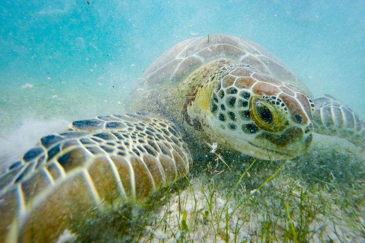 Sea turtle swimming at ocean floor