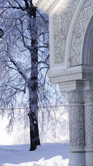 Single tree Snow Architecture Built Structure Tree Day Nature Plant No People Architectural Column Sunlight Winter