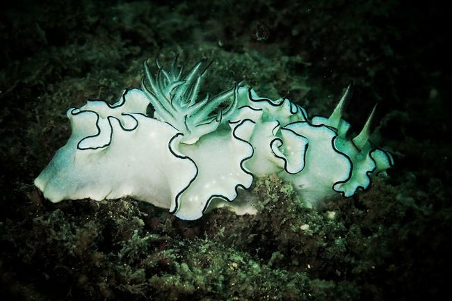 Nudi No People Underwater Nature Sea Life UnderSea Animals In The Wild Water