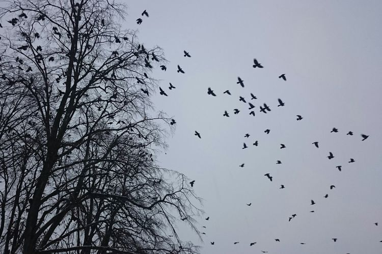 Madar Bird Freedom Flying Bird Flying Repülnek Blackandwhite Black And White Noedit Nofilter Nofilterneeded KOD Fog Foggy Day Tree Cold Days Its Cold Outside Photography In Motion Things I Like Nature Természetfotók Magyarfotósok Q Naturelovers Pattern Pieces quiet