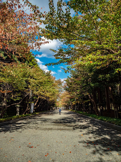 Background of an old man walking alone Tree Plant Road Day Sky Diminishing Perspective Real People Rear View Cloud - Sky Footpath Incidental People Men Treelined Outdoors Hokkaido Shrine Sapporo Hokkaido Japan EyeEmNewHere Street Photography Olympus OM-D E-M1 Mark II M.zuiko 12-40mm F2.8 Pro Autumn