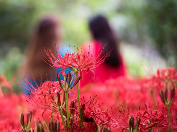 Been There. Flower No People Nature Focus On Foreground Plant Fragility Beauty In Nature Growth Petal Day Flower Head Close-up Outdoors Freshness Connected By Travel Connected By Travel An Eye For Travel Love Yourself Colour Your Horizn