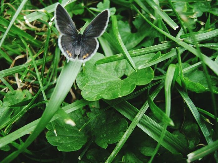 Butterfly Butterfly Green Grass Album Cover
